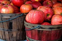 Apples in old bushel basket.