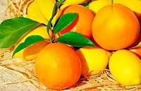 oranges and lemons, fresh citrus fruits