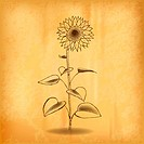 sun flower on the old background