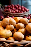 Delicious organic Yukon Gold potatoes sit in a basket at a small independent farmer´s market.