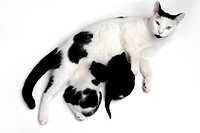 An image of a family of cats on white background