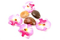 Orchid and stones isolated on white background