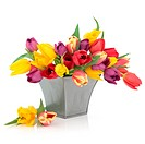 Tulip flower arrangement in rainbow colours in a distressed pewter vase and loose isolated over white background.