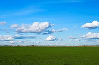 Green grass meadow, the blue sky and white clouds