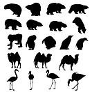 Set of bears, ape, penguins, camels and flamingos silhouettes. Vector illustration.