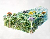 Amazon rainforest, illustration