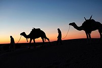 Camel drivers at dusk in the Sahara desert, near Douz, Kebili, Tunisia, North Africa, Africa
