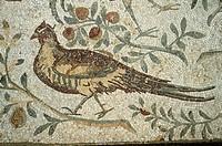 Tunisia - Carthage, archaeological site (UNESCO World Heritage List, 1979). Roman mosaic