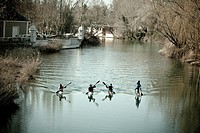 Kayakers in Tajo river in the La Isla garden Aranjuez Madrid Spain