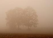 Bäume im Nebel 09