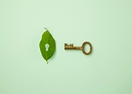 Leaf with key hole and key Ecology image