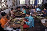 Burma, women rolling tobacco in a cigar factory                                                                                                       ...