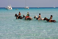 France, Corsica, Saleccia, horse ride on the beach                                                                                                    ...