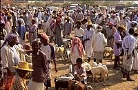 Yemen, Wadi Moor sheep market ...
