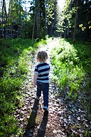 Boy walking through forest, rear view