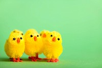 Happy Easter. Group of funny cute yellow chickens over fresh green background