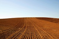 Freshly plowed field