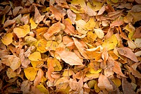 Dry autumnal leaves on a ground. Natual background.