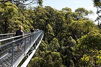 Valley of the Giants tree top walk, Walpole-Nornalup National Park, South West region of Western Australia