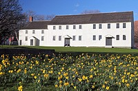 Daffodils in front of Great Friends Meeting House built 1699  Newport, Rhode Island