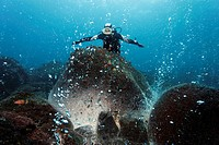 Diver measuring the spring with his armes, rocks over a volcanic hot spot, white mineral deposits, hot springs, gas bubbles, overgrown, barnacles (Bal...