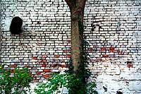Baum im Hinterhof