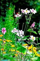 Blick in einen Garten