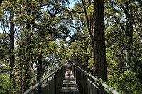 Valley of the Giants tree top walk, Walpole-Nornalup National Park, Western Australia, Australia
