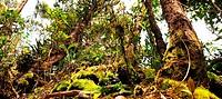 Jungle on Borneo