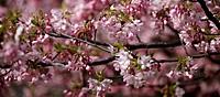trees in springtime