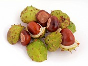 A conker is the seed of a horse chesnut tree.