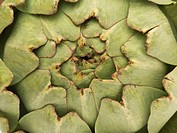 Abstract macro shot of an artichoke