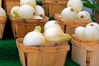 Onions in produce boxes.