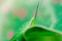 grasshopper in green nature or in farm