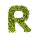 Green alphabet, letter R isolated on white