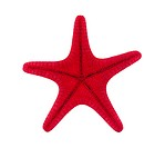 Red starfish with clipping path