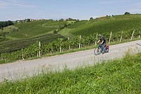 Slovenia, Maribor, Mature man cycling through vineyard
