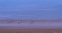 Abstract panorama view of wildebeest running in dust of Amboseli lake bed with motion blur, Amboseli, Kenya, East Africa