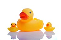 image of a cute rubber duck family on white