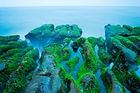 Rocky Seacoast full of green seaweed, long time exposure, Taiwan, East Asia