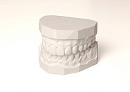 A plaster cast of a set of teeth. All on white background.