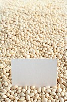Raw navy beans haricot beans, Boston beans, pea beans, Yankee beans with a blank card Selective Focus, Focus on the card