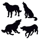 silhouette of the dog on white background