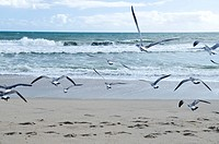Birds flying above the sand and shoreline