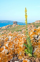 Yellow flower, rocky summer coastline and cape with pavilion