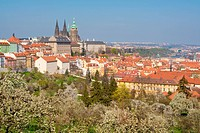 prague _ view of hradcany castle and st. vitus cathedral in spring