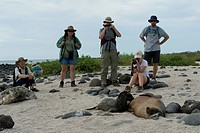 Tourists photographing a Galapagos sea lion Zalophus californianus wollebacki nursing its pup, North Seymour Island, Galapagos Islands, Ecuador