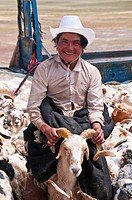Tibetan shephards shearing sheep, along the road from Tsochen to Lhasa, Western Tibet, Tibet, Asia