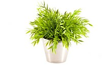 Green fake plant in silver pot on a white background.