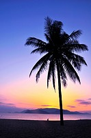 Landscape of a coconut tree against sky at sunrise